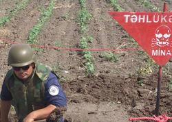 Goranboyda top mərmisi tapıldı - FOTO