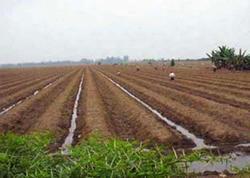 95 min hektardan artıq torpaq sahəsinin təyinatı dəyişdirildi