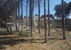 Bakıda restoran sahibinin ağacları məhv etməsi ilə bağlı cinayət işi başlandı - FOTO