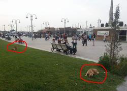 """Bakının məşhur parkında hər an faciə baş verə bilər - <span class=""""color_red"""">GƏZƏN """"TƏHLÜKƏ"""" - FOTO</span>"""