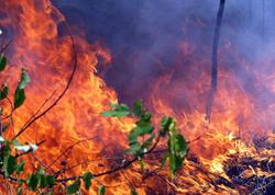 Şahdağ Millli Parkındakı yanğın söndürüldü - YENİLƏNİB
