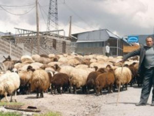 Ermənistanda 100 min kəndli hara yoxa çıxıb? - FOTO