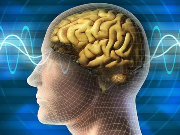 Alimlər beyin qocalmasını yavaşlatmağın yolunu tapdı