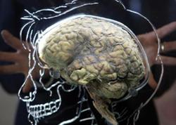 İnsan beyninin qocalmasının SİRRİ