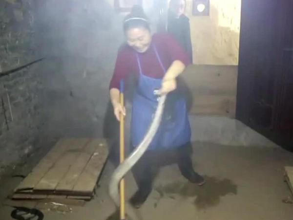 32 yaşlı qadın 1000 kobra ilə birlikdə yaşayır - VİDEO