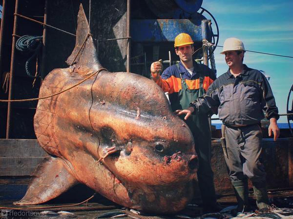 Əcaib dəniz canlıları - FOTO