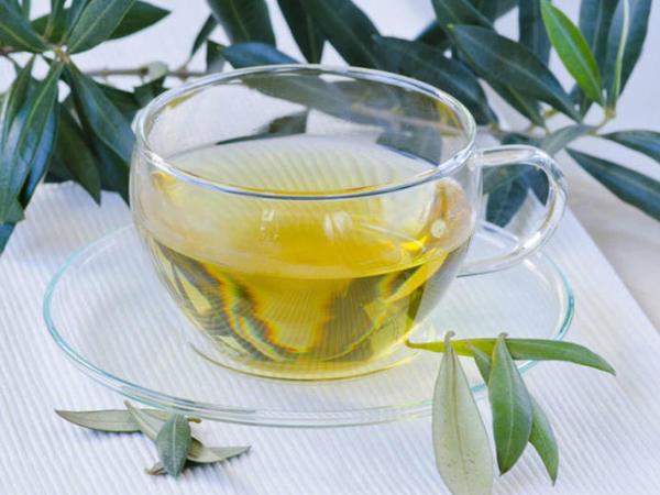 Zeytun yarpağından hazırlanan çayın faydaları