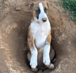 Amerikanın ən sarsaq köpəyi - FOTO