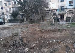 """Bakıda """"soyqırım"""" - Ağacları kökündən qoparıb aparırlar - FOTO - VİDEO"""