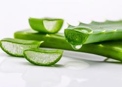 Mədə-bağırsaq xəstəlikləri zamanı bu bitkinin tətbiq edilməsi xüsusilə faydalıdır