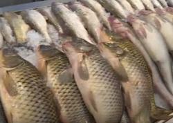 Balıq bazarında canlanma yaranıb - VİDEO