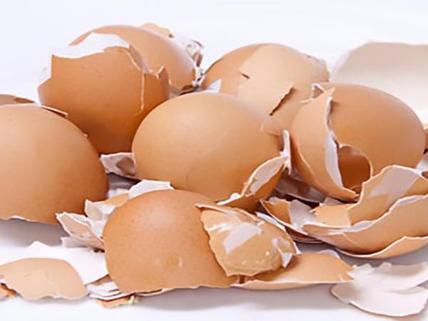 """Yumurta qabıqlarını atmayın - <span class=""""color_red"""">FƏRQLİ İSTİFADƏ QAYDALARI</span>"""