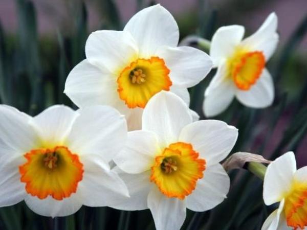 Baharın ilk çiçəkləri