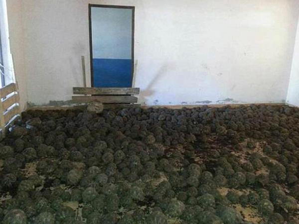 Evdən 10 min tısbağa çıxdı - VİDEO - FOTO