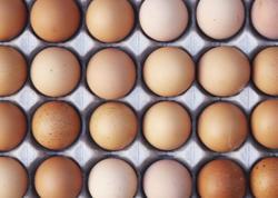 Yumurta ucuzlaşıb - VİDEO