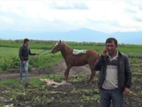 Cəlilabadda kənd sakinlərinin atları oğurlandı
