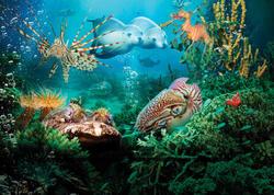 12 yeni dəniz canlısı