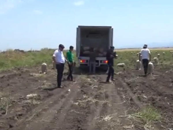 Rayonlardan kənd təsərrüfatı məhsullarının qəbuluna başlanılıb - VİDEO