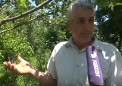 Bir ağacda 18 növ alma yetişdirir - VİDEO