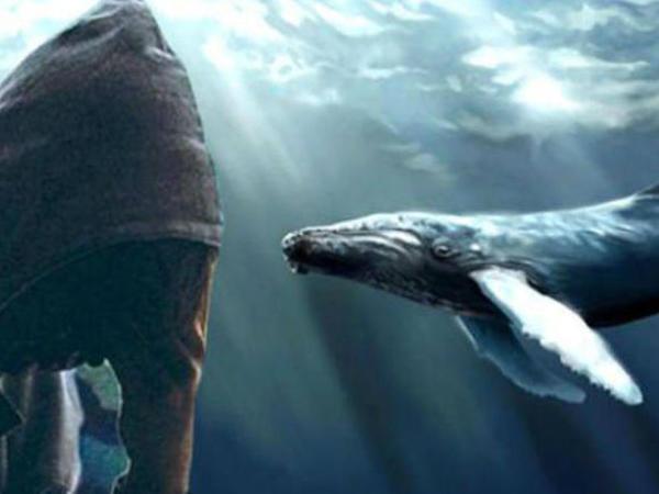 """Yüzlərlə gəncin ölümünə səbəb olan """"Mavi balina"""" bu sosial şəbəkələrdən yayılır - Qurucusu ETİRAF ETDİ"""