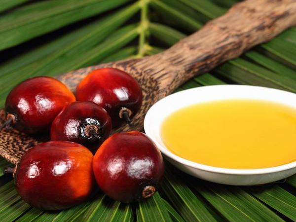 Palma yağının faydaları və zərərləri