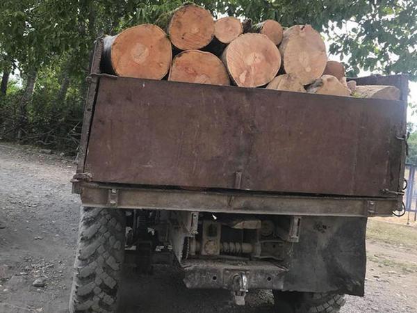 Qanunsuz yolla əldə edilmiş meşə materialı aşkar edildi - FOTO