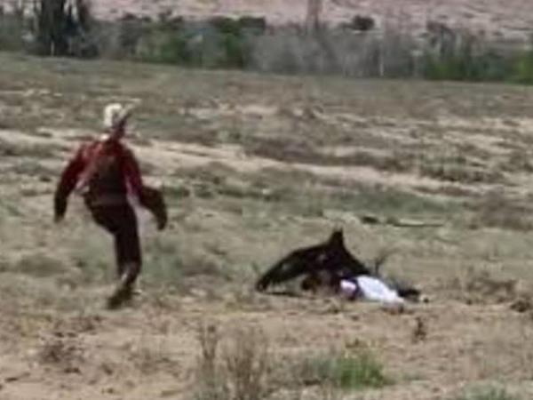 Qartal 10 yaşlı qıza hücum etdi - VİDEO