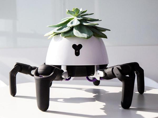Robot bağban otaq bitkilərinə qulluq edəcək