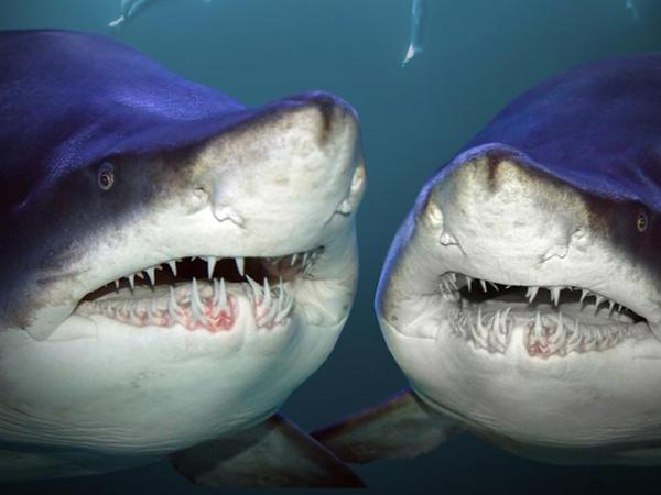 """İki köpəkbalığından qurtula bildi - <span class=""""color_red"""">VİDEO</span>"""