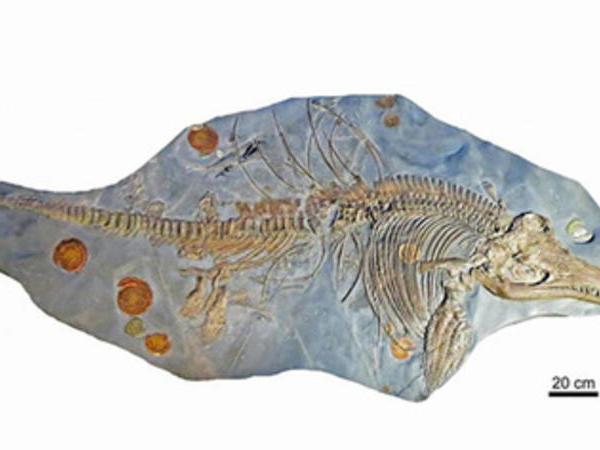 """Dinozavrlarla eyni dövrdə yaşamış """"balıq-kərtənkələ"""" skeleti AŞKARLANDI"""