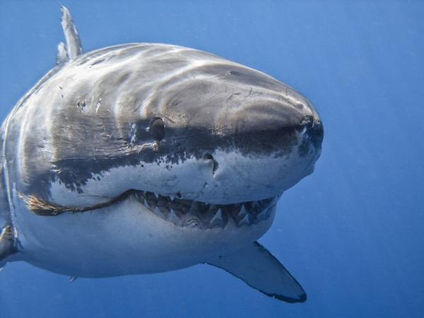 Köpək balığı qadına hücum edib
