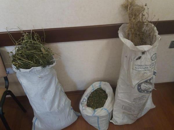 İsmayıllıda evdən 8 kq-a yaxın narkotik tapıldı - FOTO