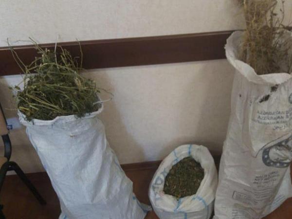 İsmayıllıda evdən 8 kq-a yaxın narkotik tapıldı - VİDEO