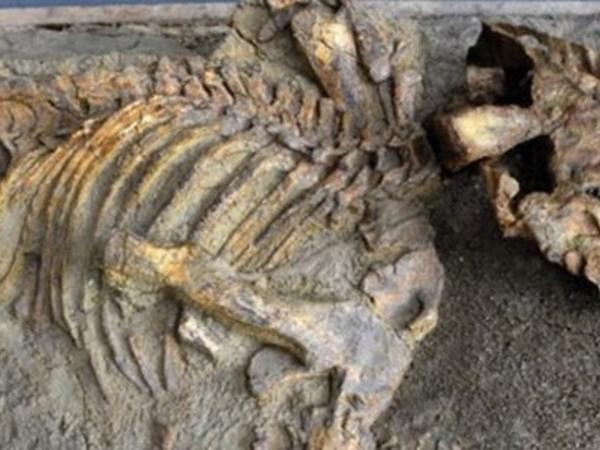 Çində 120 milyon illik dinozavr qalıqları tapıldı