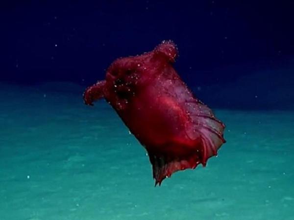 "UNİKAL TAPINTI - Okeanda qəribə məxluq - <span class=""color_red"">VİDEO</span>"