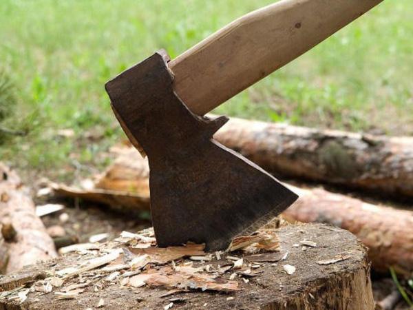 Kəsdiyi ağacın altında qalıb öldü