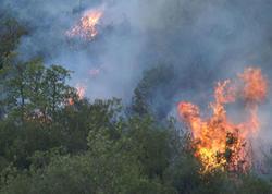 Kaliforniyada meşə yanğınları qurbanlarının sayı 48-ə çatdı