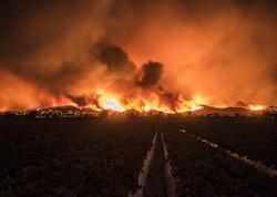 Kaliforniyada meşə yanğınları nəticəsində ölənlərin sayı 66-ya çatıb