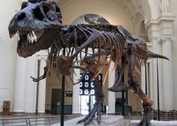 Dinozavr skeletləri hərracda 1,5 milyon dollara satılacaq