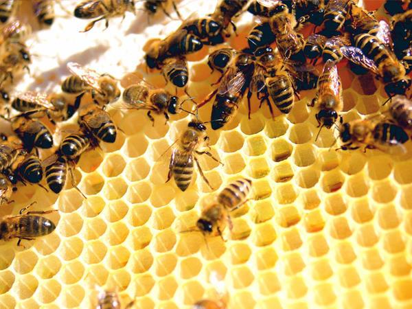 """Arıların """"naviqasiya sistemi"""" aşkarlanıb"""