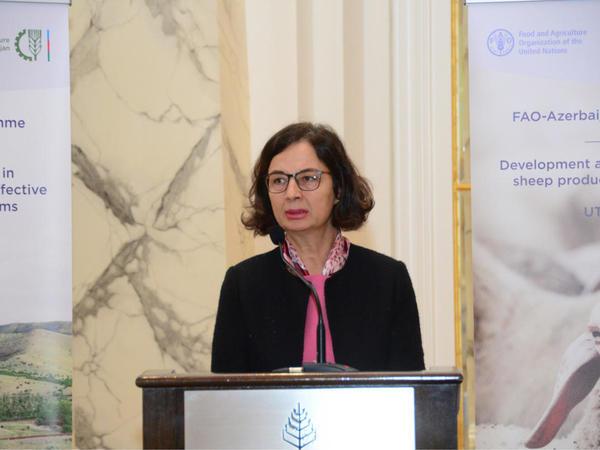 FAO Azərbaycanla birgə layihələr reallaşdırmaqda maraqlıdır - FOTO