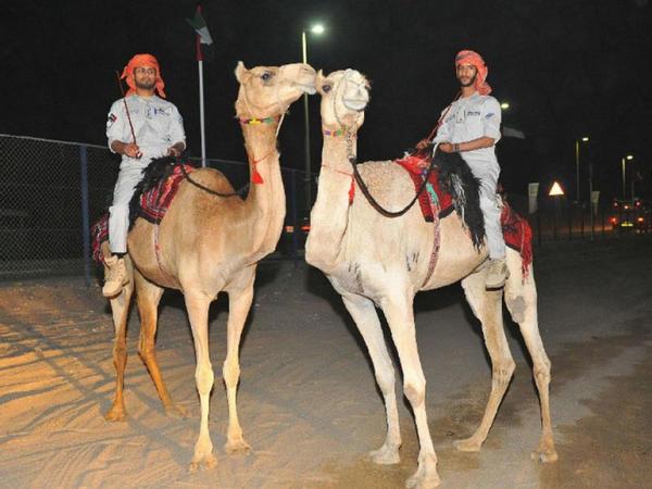 Əbu-Dabi polisi dəvələrin üstündə patrul xidməti aparacaq