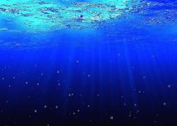 Avstraliyada müəmmalı dəniz canlısı tapıldı - FOTO