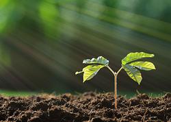 Bitkilərin daha çox fotosintez etməsini təmin edən üsul