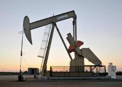 Birləşmiş Ştatların sutkalıq neft istehsalı rekord səviyyədədir