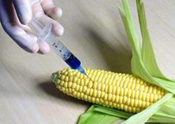 GMO məhsullar Azərbaycan bazarına əsasən hansı ölkələrdən daxil olur?