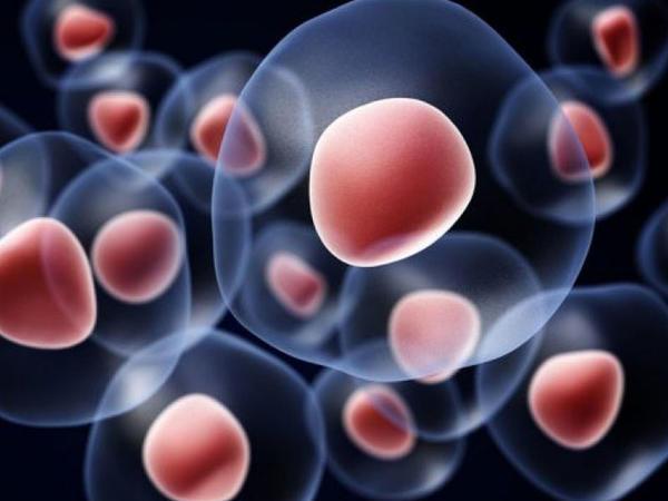 Diabetin müalicəsi üçün gövdə hüceyrələri yaradılıb