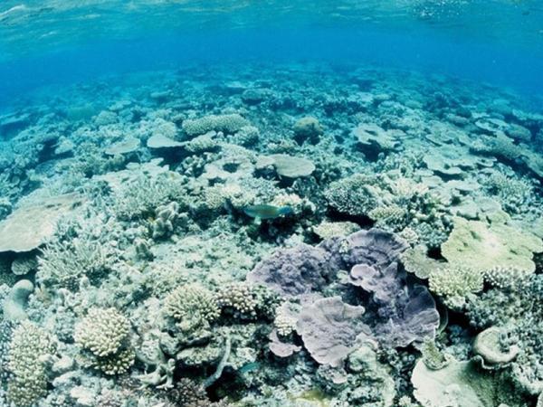 Əbu-Dabi Dünya okeanı problemlərinə dair sammitə ev sahibliyi edəcək