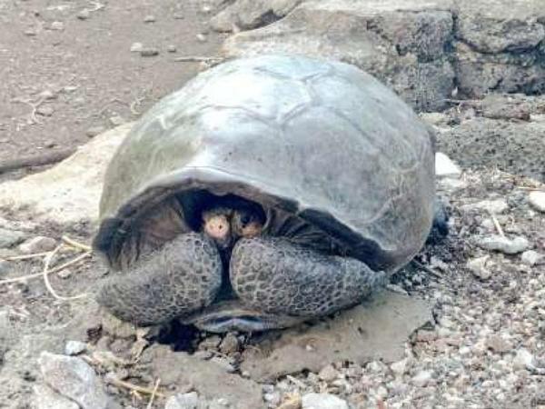 Nəsli 100 il əvvəl kəsilmiş sayılan tısbağa tapılıb