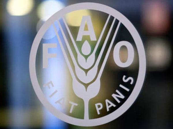 """Milli Meşə Proqramının hazırlanmasında əsas nəyə diqqət edilir? - <span class=""""color_red"""">FAO açıqladı</span>"""